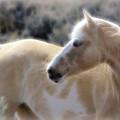 Equine Golden Glow by Athena Mckinzie