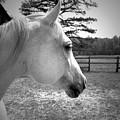 Equine Profile by Gerri Ricci