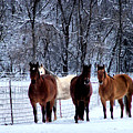 Equine Winter by Karen Scovill