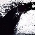 Equus by Prash Sankhe