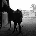 Equus Sapien IIi by J M Lister