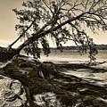 Erosion - Anselized by Ricky Barnard