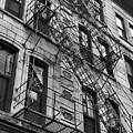 Escape Ladders  by Rachel Gilman