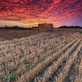 Essex Hay At Sunrise by Cale Best