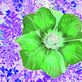 Ethereal Purple Poppy Too by Marian Bell