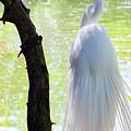 Ethereal Snowy Egret by Gloria Moeller