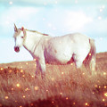 Unicorn On Dartmoor by Toula Mavridou-Messer