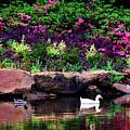Ethreal Beauty At The Azalea Pond by Tamyra Ayles