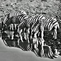 Etosha Pan Reflections by Douglas Barnard