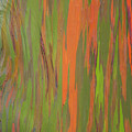 Eucalyptus Abstract by Patti Deters
