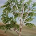 Eucalyptus by Angeles M Pomata