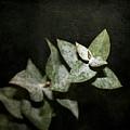 Eucalyptus  by Cathie Tyler