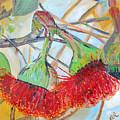 Eucalyptus Flowers by Reina Resto