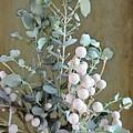 Eucalyptus  by Melissa Davis