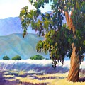 Eucalyptus On The Bluffs by Dorothy Nalls