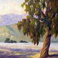 Eucalyptus Sentinel by Dorothy Nalls
