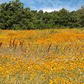 Eufaula Meadow by Carolyn Fletcher