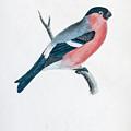 Eurasian Bullfinch Artwork by Ilan Rosen