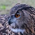 Eurasian Eagle Owl by Andrew Lelea