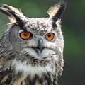 Eurasian Eagle Owl by CJ Park