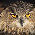 Eurasian Eagle Owl Portrait by Christopher Miles Carter