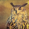 European Eagle Owl  by Modern Art