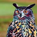 European Eagle Owl by Robert Kinser