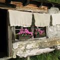European Windowsill by Carol Peck