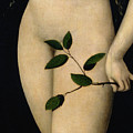 Eve by The Elder Lucas Cranach