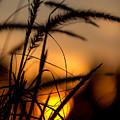 Evening Arrives by Andrea Kappler