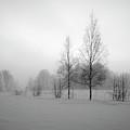 Evening Birches Bw by Jouko Lehto