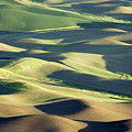 Evening Fields by Memoriee Sconce