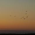 Evening Flight by Jacklyn Duryea Fraizer