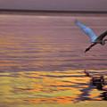 Evening Flight by Susanne Van Hulst