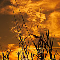 Evening Grass by Svetlana Sewell