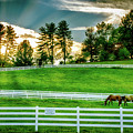 Evening Graze In Tennessee by Mountain Dreams