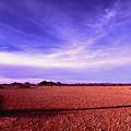 Evening In The Arizona Desert by Bill Williams