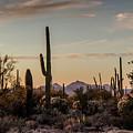 Evening In The Desert by Teresa Wilson