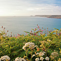 Evening Light In Cornwall by Terri Waters