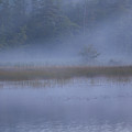 Evening Mist In Powder Blue by Irwin Barrett