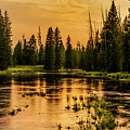 Evening On The Henry's Fork  by TL Mair