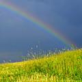 Evening Rainbow Over Pasture Field by Thomas R Fletcher