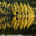 Evening Reflections On Alder Lake by Larry Ricker