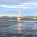 Evening Sail In Frenchman's Bay by Elizabeth Dow