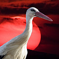 Evening Stork  by Cliff Norton
