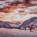 Evening Stroll by Kumar Annamalai
