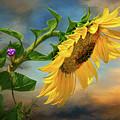 Evening Sunflower by Carolyn Derstine