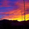 Evening Sunset by Michael C Crane