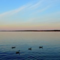 Evening Swimming Geese Three  by Lyle Crump