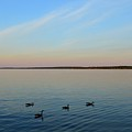 Evening Swimming Geese Two  by Lyle Crump
